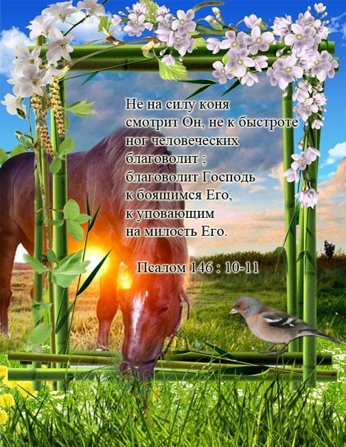 Христианские открытки с цитатами из библии 6