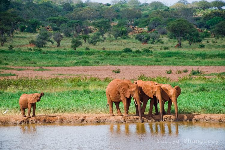 2 day safari from diani beach