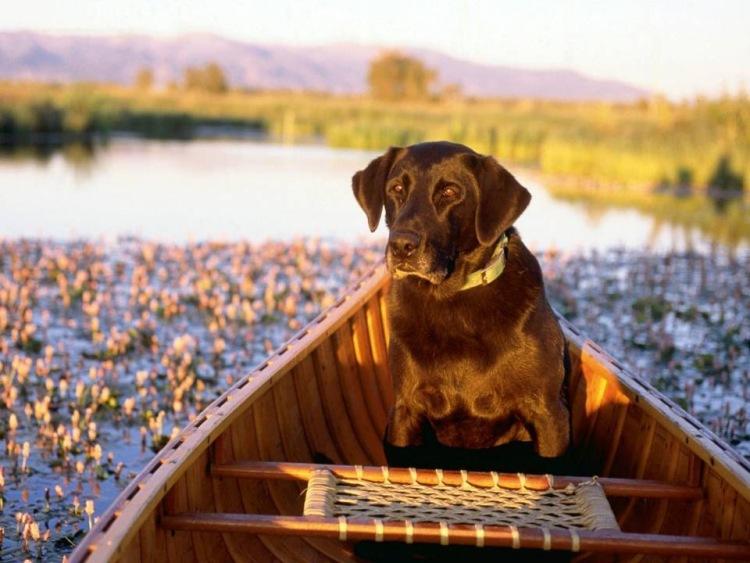 как собака спасла собак в лодке