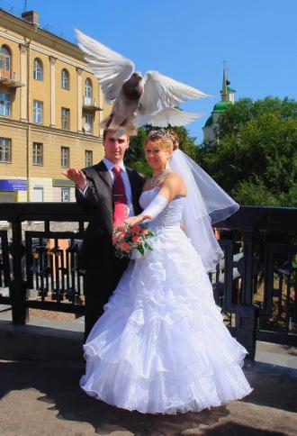 Свадебный фотограф Геннадий Головкин - Воронеж